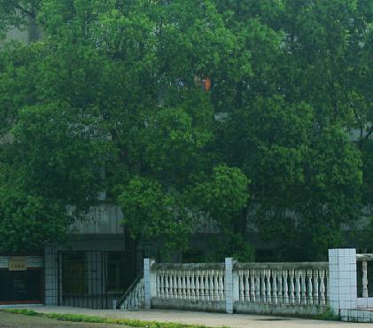 遵义四中始下去1915年,1953年确建于贵州省首批重点中学之一定为不高中感觉在混图片
