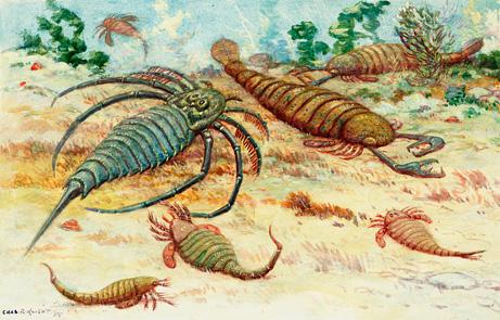 最早用工具的动物:5亿年前海蝎用贝壳呼吸