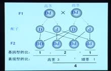高考生物专题复习方案视频讲座-第20讲 人类遗传病专题复习   下