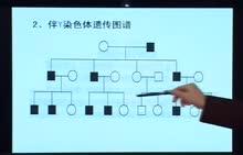 高考生物专题复习方案视频讲座-第19讲 性别决定和伴性遗传专题复习    下