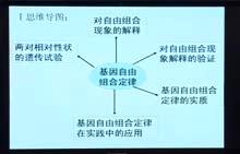 高考生物专题复习方案视频讲座-第16讲 基因自由组合定律专题复习   上