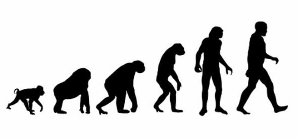 各种动物走路的姿势