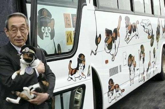 列车也疯狂 萌系动物当站长喝着咖啡去旅行