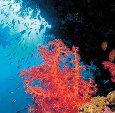 深入地球海底的未知领域对海洋与世隔绝的地带进行了深入的研究和探索