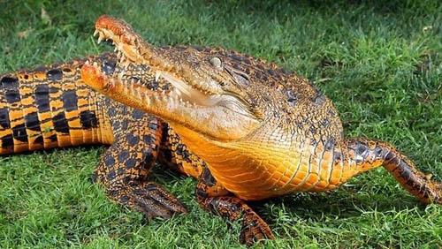 盘点怎么盘_盘点自然界中罕见的色彩变异动物