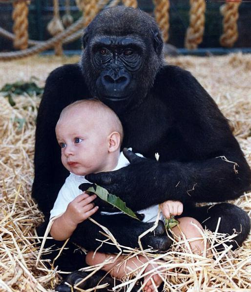 女子在现实和古代来回穿越|女子在丛林找到12年前大猩猩玩伴 与之再度相拥
