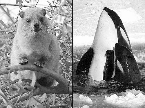 动物叫声类似人类语言
