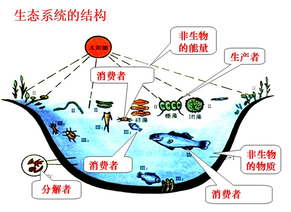 高中生物知识点总复习答:高中生物知识点总结1,生命系统的结构层次