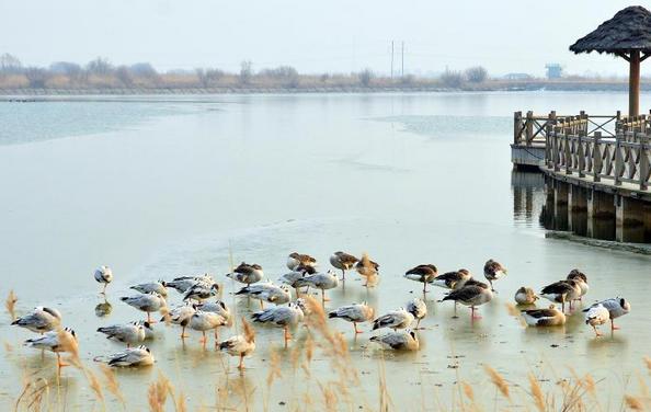 山东大学_山东 黄河三角洲生态保护区的冬日恋歌