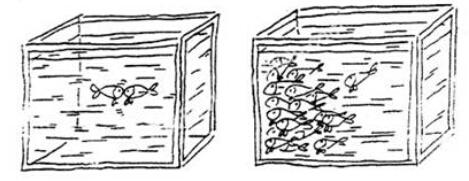 """[2015年上海高考作文题]2015年高考作文题预测:""""我,是一条交往过密的鱼"""""""