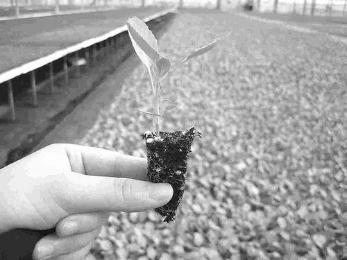 [泥炭萃取物]泥炭:鲜为人知的农业自然资源