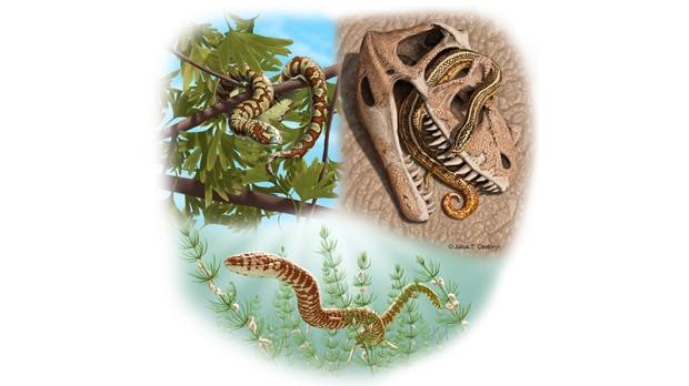 画蛇添足的意思_画蛇添足或许未错 科学家称发现四脚蛇化石