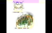 【一师一优课】光合作用的过程 生物视频