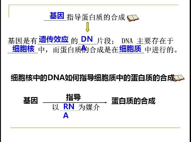 高一 生物 第四章 基因的表达-基因指导蛋白质的合成