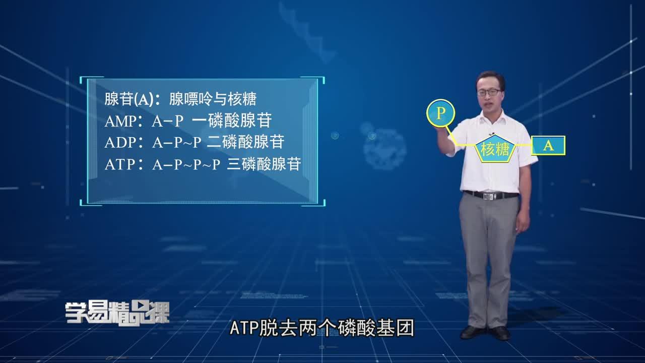 细胞的代谢 ATP在能量代谢中的作用 第一讲 ATP的结构与利用