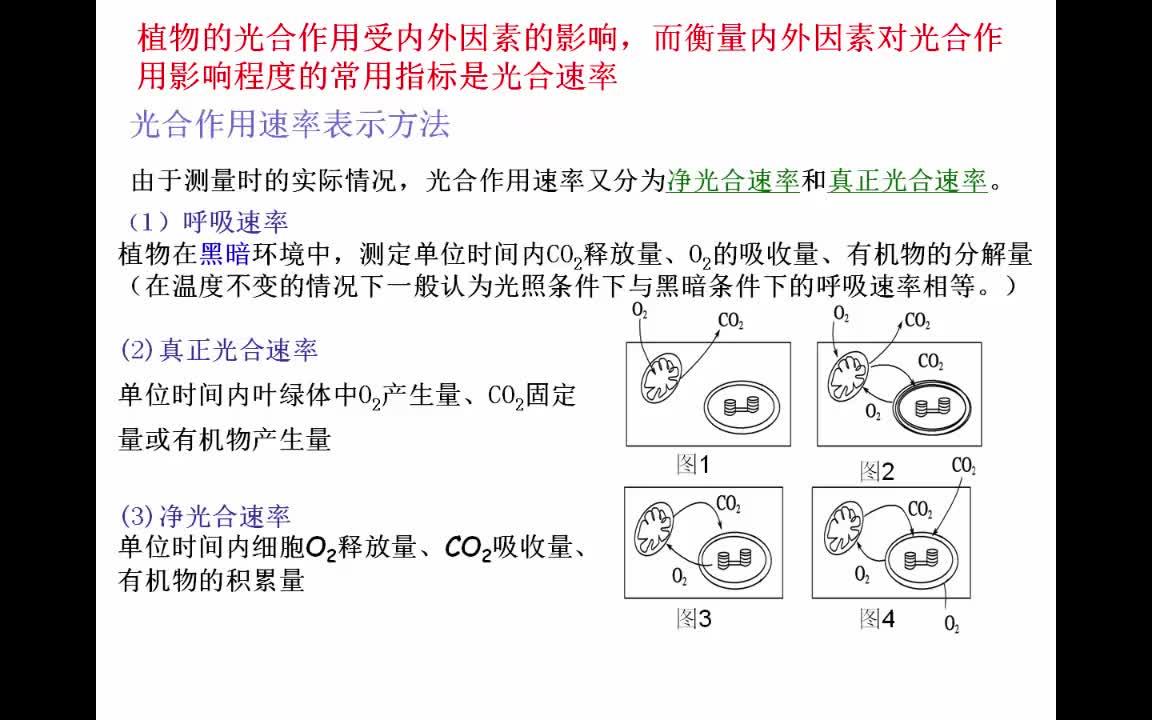 孙春红-人教版 高一生物 必修一 第五章第四节 影响光合作用的因素