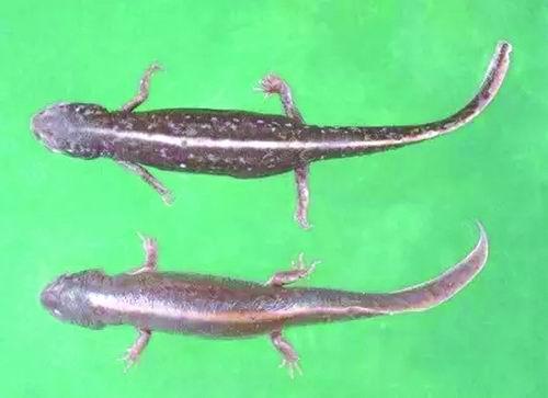 两栖爬行动物:它们也该被拯救(2)