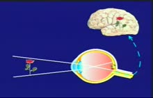 人教版 七年级生物下册 第四单元 第一节:眼和视觉-视频素材