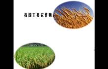七年级历史与社会 气候与农作物分布