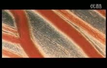 人教版七年级生物下册 :16.血液的组成和各部分的功能-视频素材