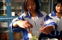 人教版 七年级生物上册 第三单元 第五章 第一节《光合作用吸收二氧化碳释放氧气》-实验演示