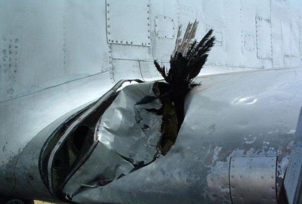 飞鸟能击落一架飞机