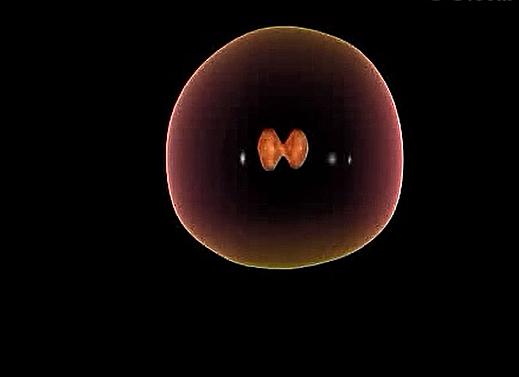 初三生物:动物细胞分裂-视频素材