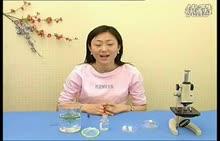 七年级生物 观察人血永久涂片和小鱼尾鳍内的血液流动-实验演示