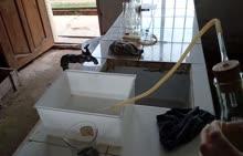 鲁教版九年级化学实验视频 氧气的实验室制取