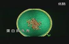 人教版 八年级生物上册 第五单元 第五章-病毒的结构和繁殖-视频素材