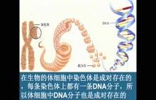 人教版 八年级生物下册 第七单元 第二章 第二节:基因在亲子代间的传递-太原51中李晓军-微课堂