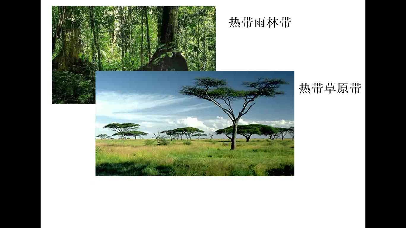 高一地理微课:自然带的分布