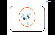 人教版 高一生物必修二 第四章 第1节:基因指导蛋白质的合成-微课堂 (2份打包)