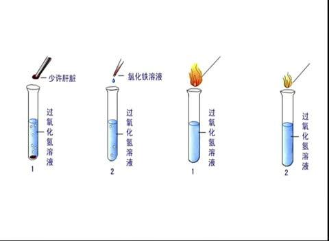 人教版 高一生物必修一 第5章 第1节:酶的特性
