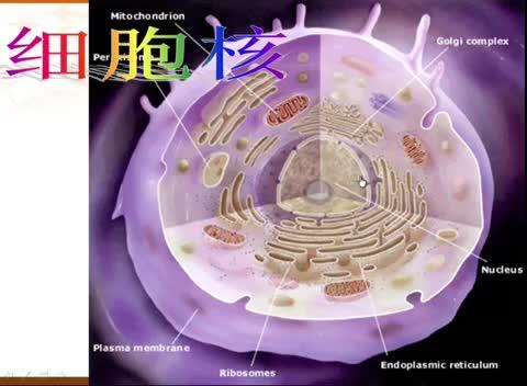 人教版 高一生物必修一 第3章 第3节:细胞核