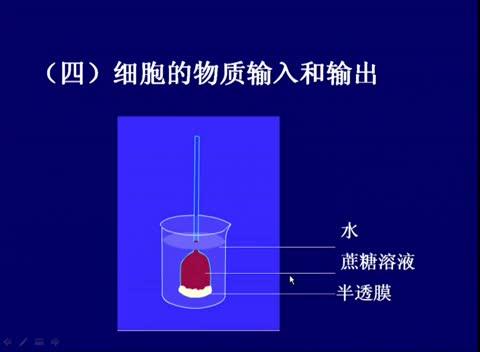 人教版 高一生物必修一 第3章  第1节:细胞膜的主要功能(二)-名师示范课