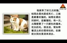 人教版 七年级语文上册(2016)第五单元 第17节 猫(朗读)-视频素材