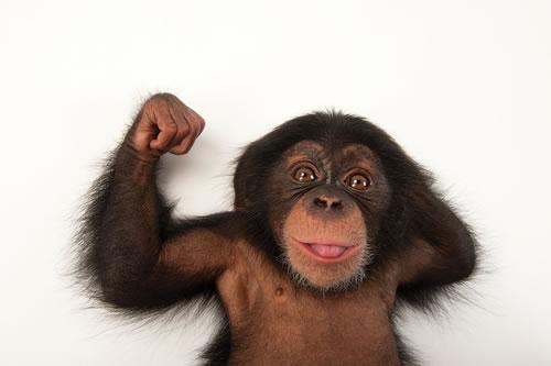 """黑猩猩非""""超人"""""""