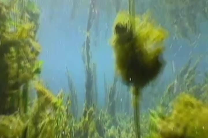 济南版生物七年级上册2.1.1藻类、苔藓和蕨类植物的主要特征及比较微课