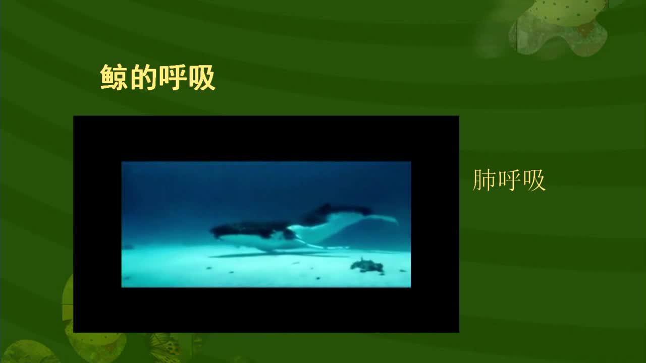 【名校名师微课】八年级上生物(人教版)核心知识名师讲解视频:水中的哺乳动物