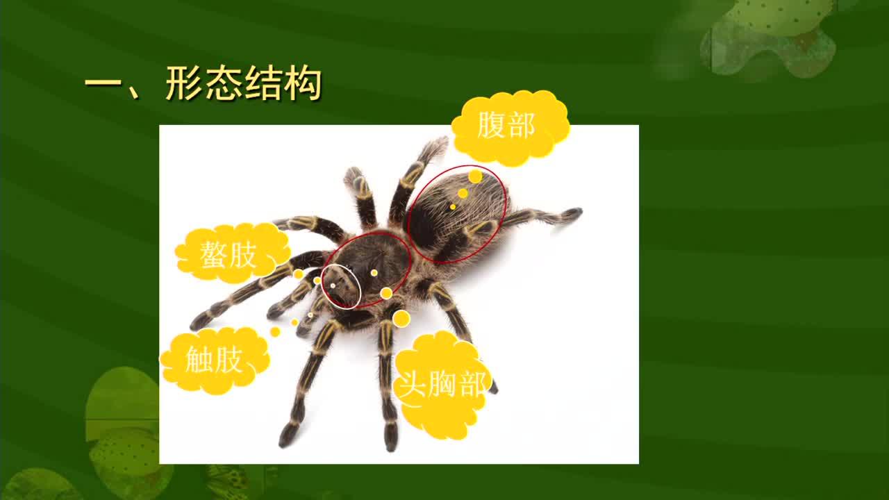 【名校名师微课】八年级上生物(人教版)核心知识名师讲解视频:蜘蛛