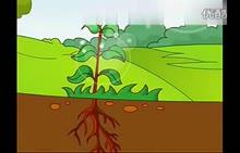 人教版 七年级生物 第三单元:18.绿色植物的光合作用-视频素材
