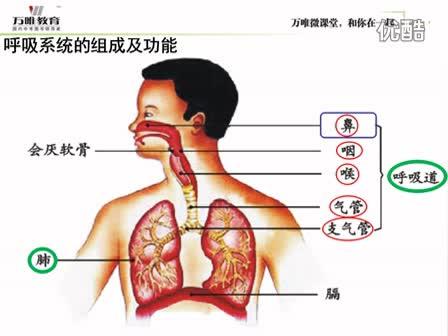 人教版 七年级生物—识图微课·呼吸系统-微课堂