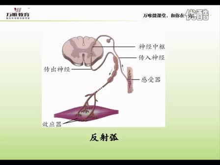 人教版 七年级生物—识图微课·反射弧-微课堂