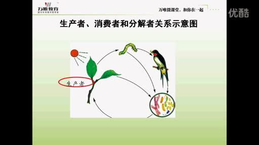 人教版 七年级生物:生物与环境构成生态系统-微课堂