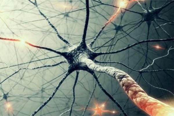 """人类皮肤细胞可直接""""变身""""运动神经元"""