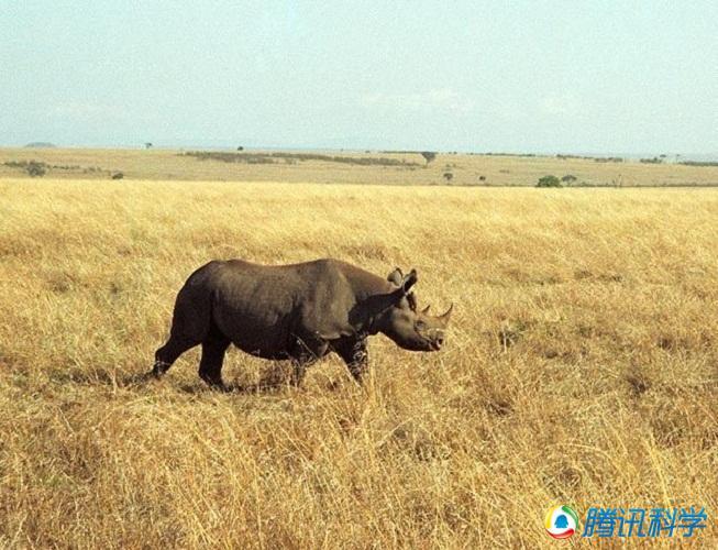 过去十年间可能已经灭绝的动物物种(2)
