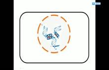 人教版 高一生物必修二 第4章 第1节:基因指导蛋白质的合成-微课堂视频