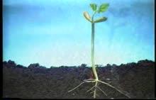 苏科版 八年级生物上册 19.2 植物的生长发育 种子萌发的过程-视频素材