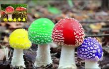 人教版 八年级生物上册 如何识别毒蘑菇-视频素材